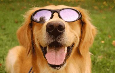 Sunglass Dog-01